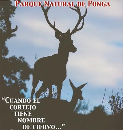 Tras el rastro de la berrea de los ciervos en el parque natural de Ponga en Asturias