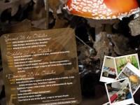 IX Jornadas Micológicas de la Mancomunidad Alto Águeda en Salamanca